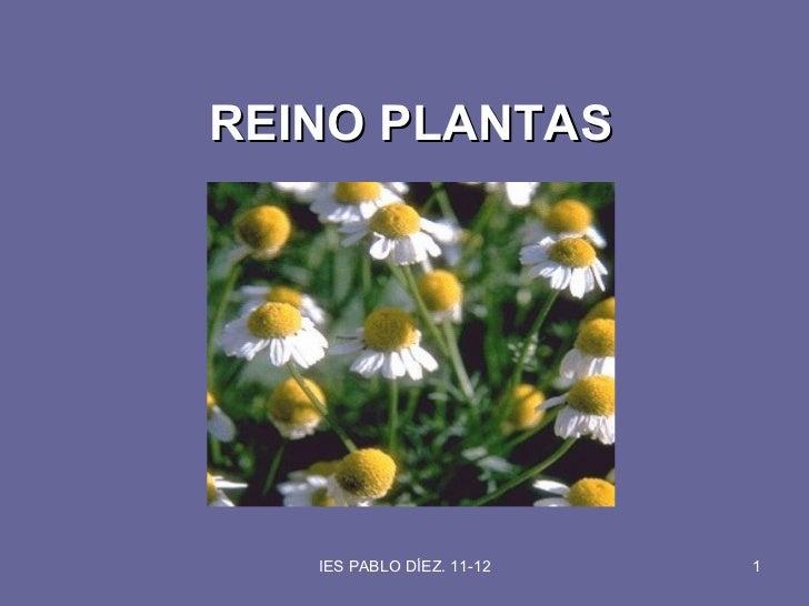 REINO PLANTAS   IES PABLO DÍEZ. 11-12   1
