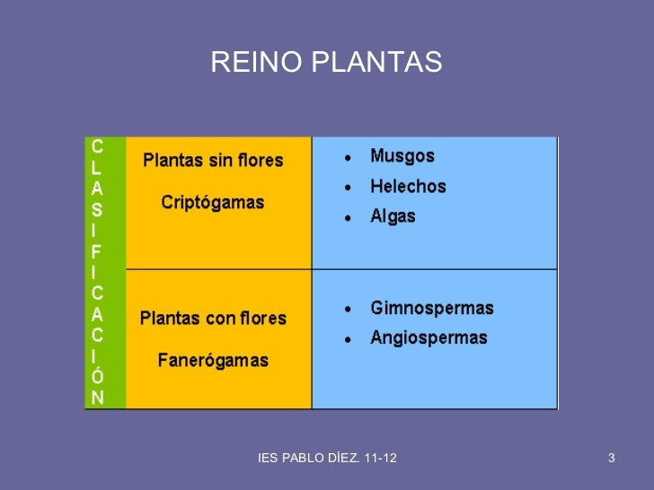 Reino plantas Slide 3