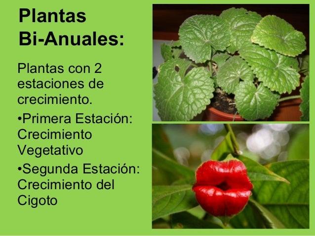 Ppt reino plantas ponte macarena if16 for Ejemplos de arboles de hoja perenne