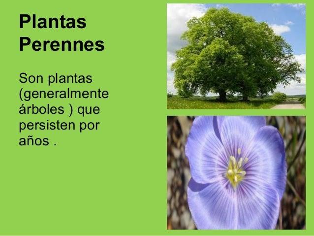 Ppt reino plantas ponte macarena if16 for Que son plantas ornamentales ejemplos