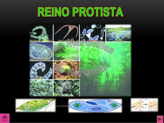El Reino Protistas está formado por microorganismosunicelulares eucariotas, filamentosos o coloniales, unos puedenrealizar...