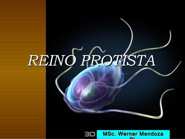 REINO PROTISTA        MSc. Werner Mendoza