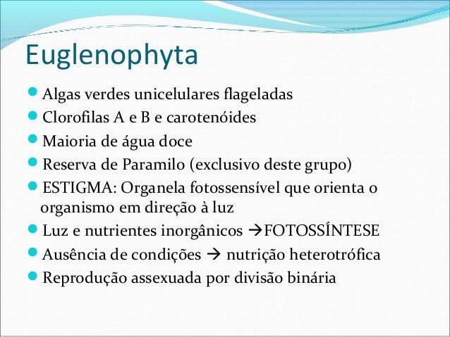 Euglenophyta Algas verdes unicelulares flageladas Clorofilas A e B e carotenóides Maioria de água doce Reserva de Para...