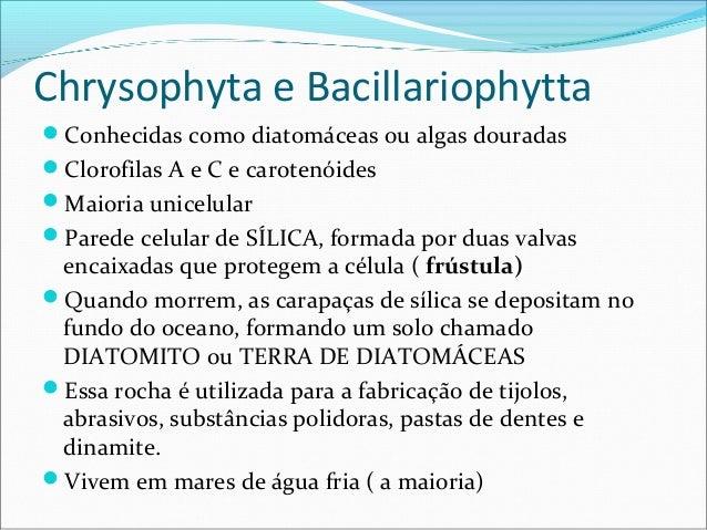 Chrysophyta e Bacillariophytta Conhecidas como diatomáceas ou algas douradas Clorofilas A e C e carotenóides Maioria un...