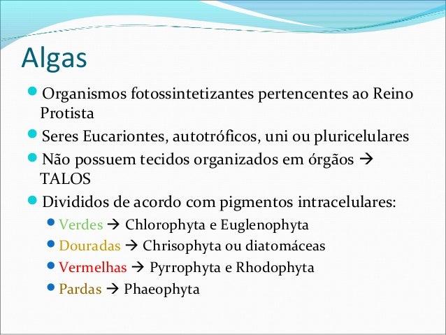 Algas Organismos fotossintetizantes pertencentes ao Reino Protista Seres Eucariontes, autotróficos, uni ou pluricelulare...