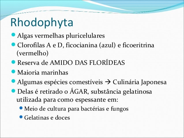 Rhodophyta Algas vermelhas pluricelulares Clorofilas A e D, ficocianina (azul) e ficoeritrina (vermelho) Reserva de AMI...