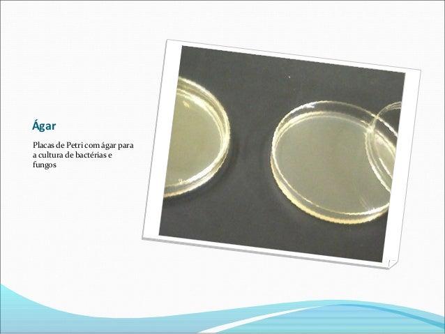 Ágar Placas de Petri com ágar para a cultura de bactérias e fungos
