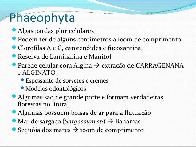 Phaeophyta Algas pardas pluricelulares Podem ter de alguns centímetros a 100m de comprimento Clorofilas A e C, carotenó...