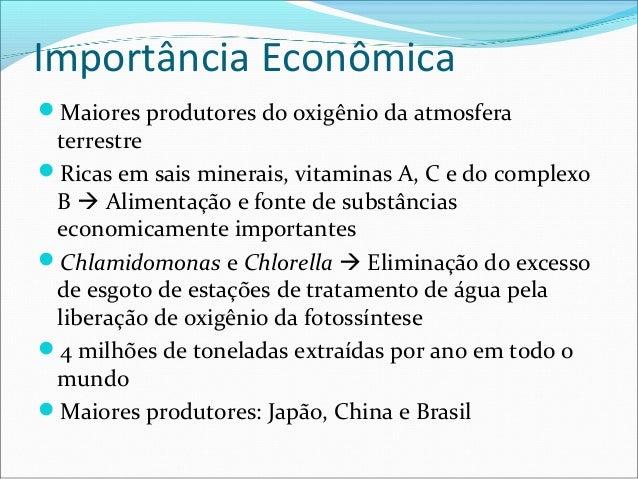 Importância Econômica Maiores produtores do oxigênio da atmosfera terrestre Ricas em sais minerais, vitaminas A, C e do ...