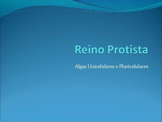 Algas Unicelulares e Pluricelulares