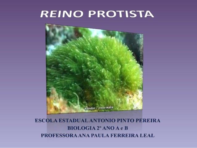 Características Gerais• Domínio – Eucarya;• Organismos eucariontes – uni e pluricelulares;• Vida livre – água doce, salga...