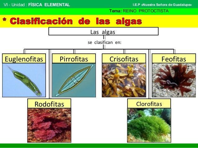 macrocystis slide