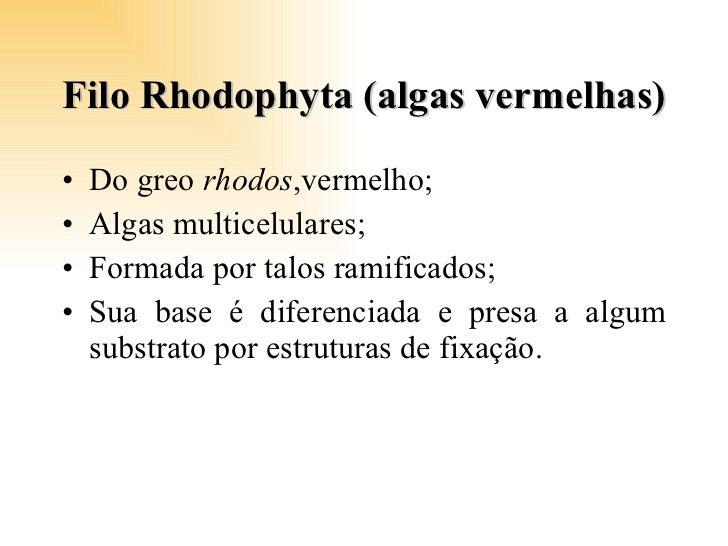 Filo Rhodophyta (algas vermelhas) <ul><li>Do greo  rhodos ,vermelho; </li></ul><ul><li>Algas multicelulares; </li></ul><ul...