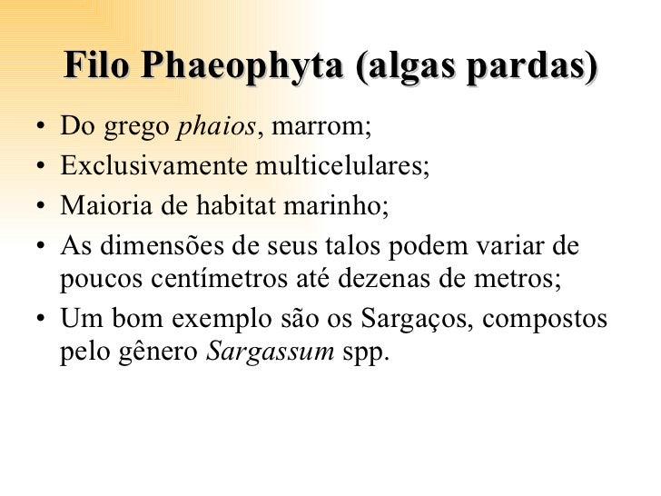 Filo Phaeophyta (algas pardas) <ul><li>Do grego  phaios , marrom; </li></ul><ul><li>Exclusivamente multicelulares; </li></...
