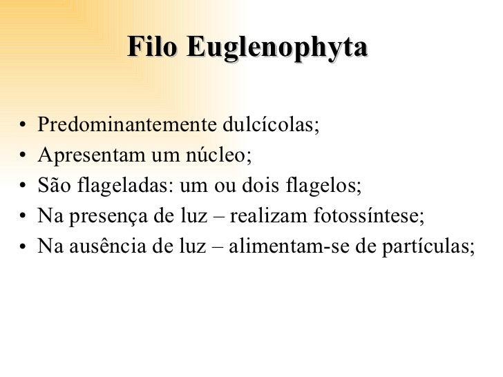 Filo Euglenophyta  <ul><li>Predominantemente dulcícolas; </li></ul><ul><li>Apresentam um núcleo; </li></ul><ul><li>São fla...