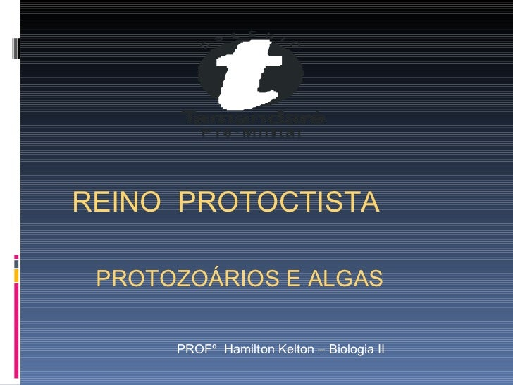 PROFº  Hamilton Kelton – Biologia II REINO  PROTOCTISTA PROTOZOÁRIOS E ALGAS