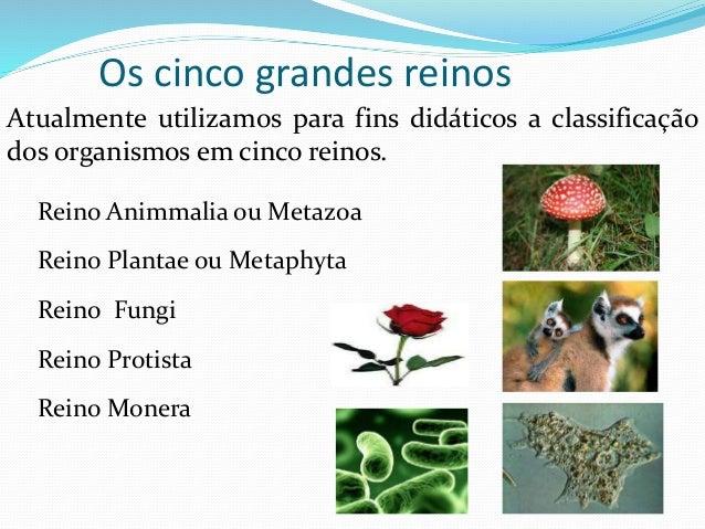 Reino Animmalia ou Metazoa Reino Plantae ou Metaphyta Reino Fungi Reino Protista Reino Monera Atualmente utilizamos para f...