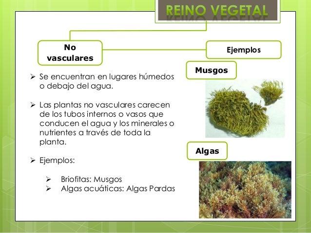 Reinos1 for Que son plantas ornamentales ejemplos