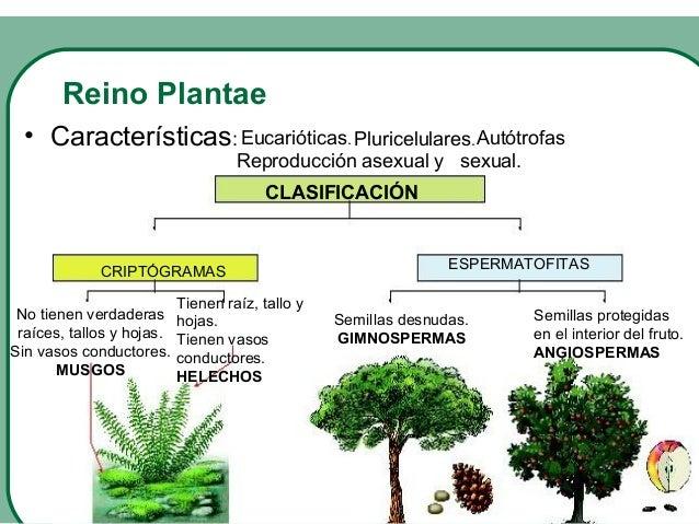 Reino plantae reproduccion asexual de las plantas
