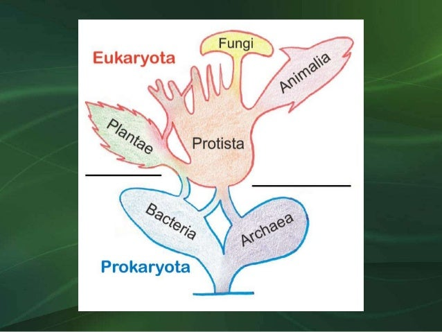 Reinos Biológicos Slide 2
