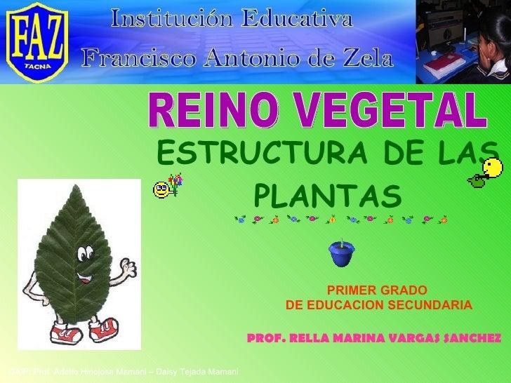 ESTRUCTURA DE LAS PLANTAS REINO VEGETAL PROF. RELLA MARINA VARGAS SANCHEZ DAIP: Prof. Adolfo Hinojosa Mamani – Daisy Tejad...