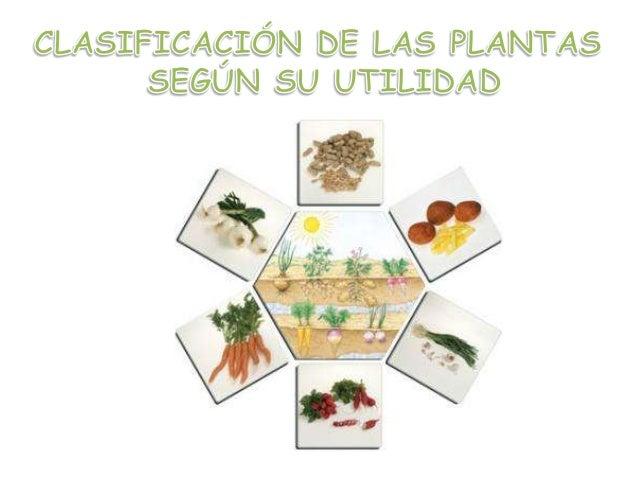 Reino vegetal for Plantas medicinales y ornamentales