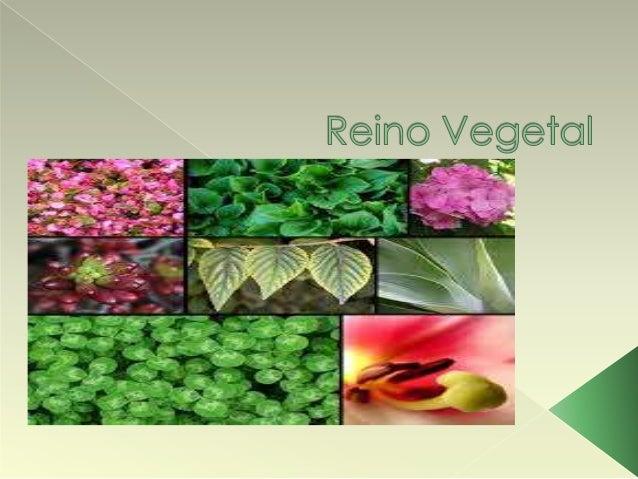  O reino vegetal ou das plantas, é  caracterizado por organismos  autótrofos e clorofilados uma vez que,  por meio da luz...
