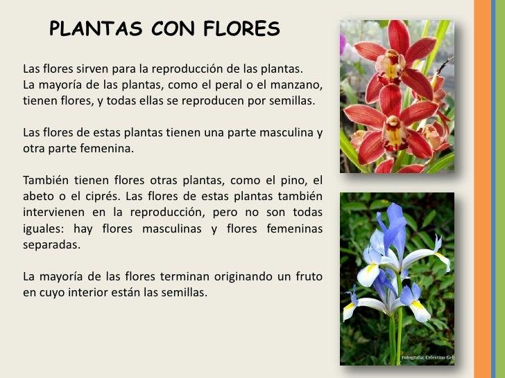 Reino vegetal for Que son las plantas ornamentales y para que sirven