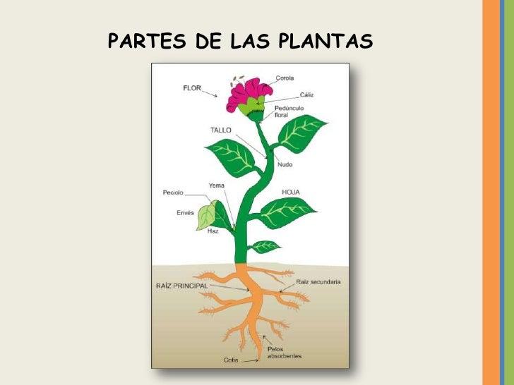 Reino vegetal - Cosas sobre las plantas ...