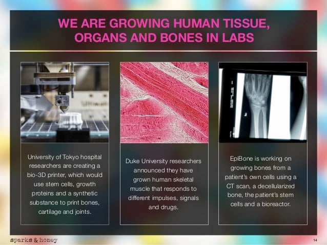14 WE ARE GROWING HUMAN TISSUE, 
