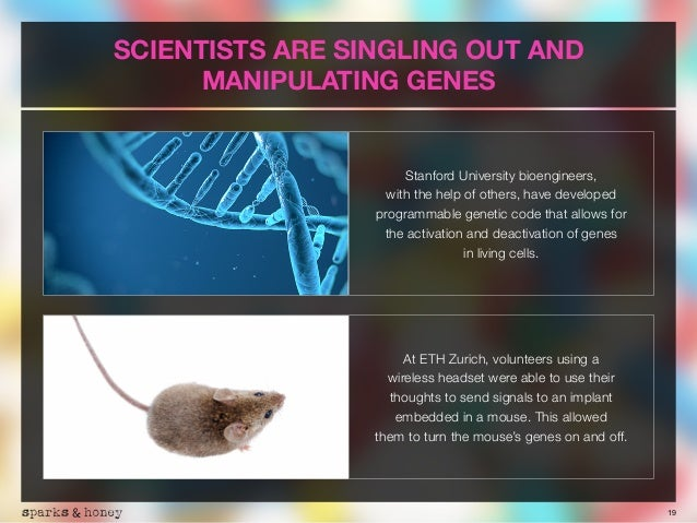 19 SCIENTISTS ARE SINGLING OUT AND MANIPULATING GENES Stanford University bioengineers, 
