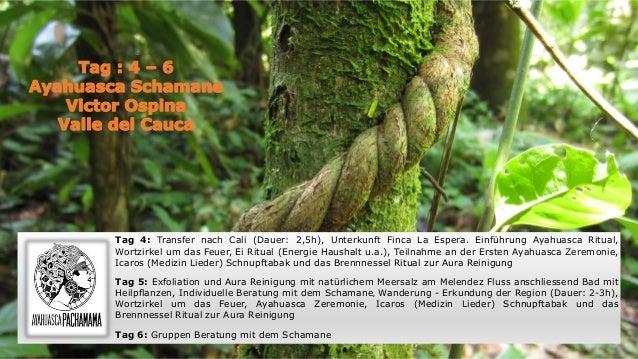Tag 4: Transfer nach Cali (Dauer: 2,5h), Unterkunft Finca La Espera. Einführung Ayahuasca Ritual, Wortzirkel um das Feuer,...