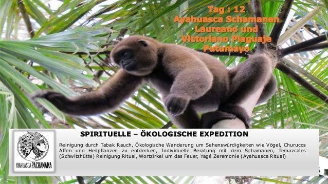SPIRITUELLE – ÖKOLOGISCHE EXPEDITION Reinigung durch Tabak Rauch, Ökologische Wanderung um Sehenswürdigkeiten wie Vögel, C...
