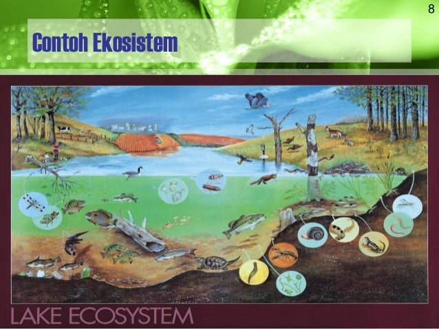Rekling02a Ekologi Ekosistem