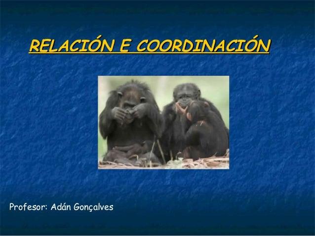 RELACIÓN E COORDINACIÓNRELACIÓN E COORDINACIÓN Profesor: Adán Gonçalves
