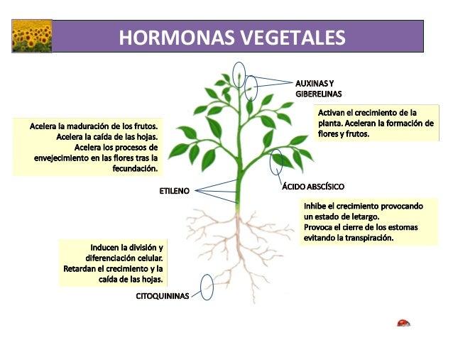Relaci n en las plantas eat for Hormonas en las plantas