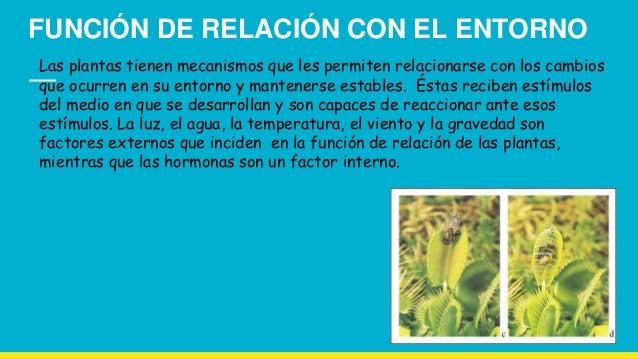 Relacion control y movimiento de las plantas for Funcion de las plantas ornamentales