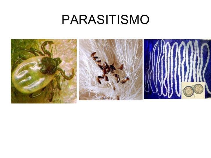 Que sacan a los parásitos del organismo