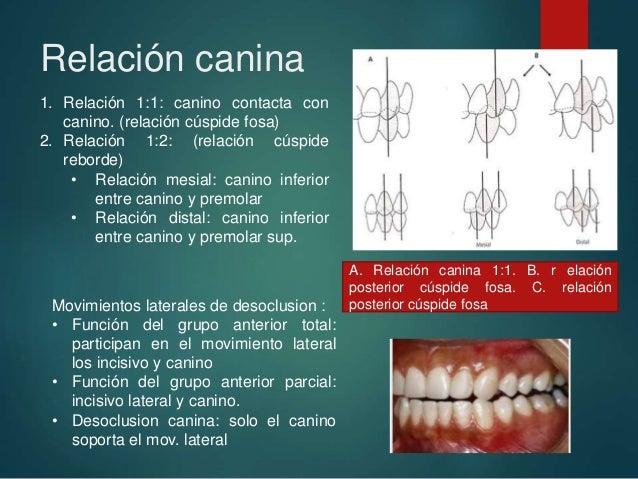 relaciones intermaxilares y relacin molar y canina recuperado 10 638