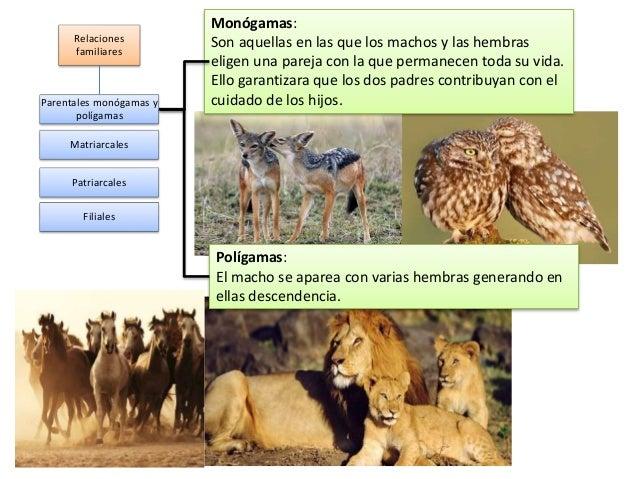 Relaciones familiares Parentales monógamas y polígamas Matriarcales Patriarcales Filiales Monógamas: Son aquellas en las q...