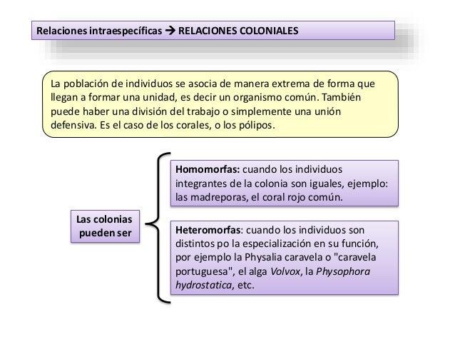 Relaciones intraespecíficas  RELACIONES COLONIALES La población de individuos se asocia de manera extrema de forma que ll...