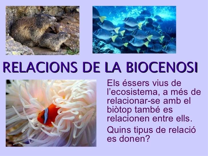 RELACIONS  DE LA BIOCENOSI Els éssers vius de l'ecosistema, a més de relacionar-se amb el biòtop també es relacionen entre...