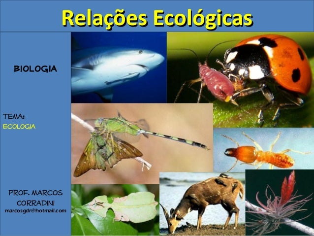 Biologia Tema: Ecologia Prof. Marcos Corradini marcosgdr@hotmail.com Relações EcológicasRelações Ecológicas