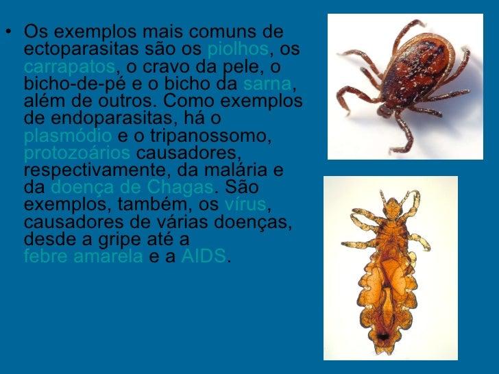 Resultado de imagem para exemplos de ectoparasitas