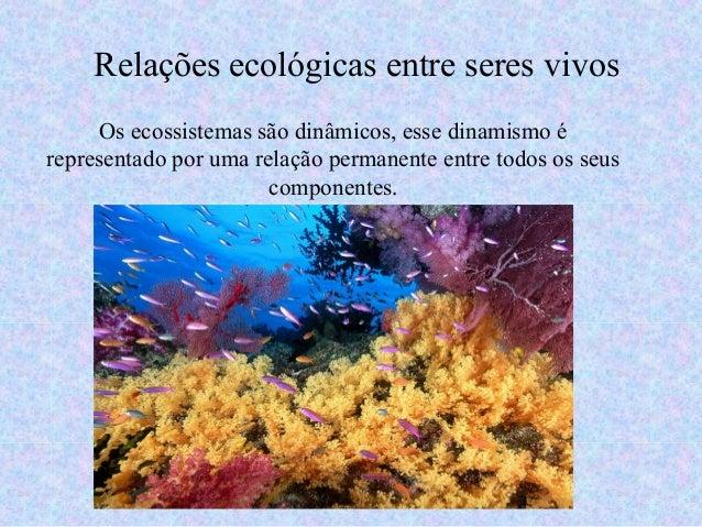 Os ecossistemas são dinâmicos, esse dinamismo é representado por uma relação permanente entre todos os seus componentes. R...
