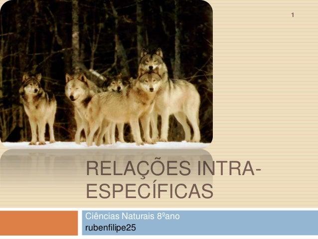 1  RELAÇÕES INTRAESPECÍFICAS Ciências Naturais 8ºano rubenfilipe25