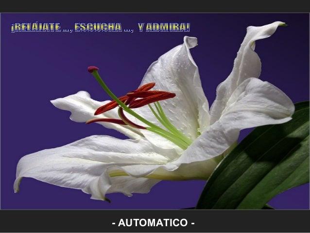 - AUTOMATICO -