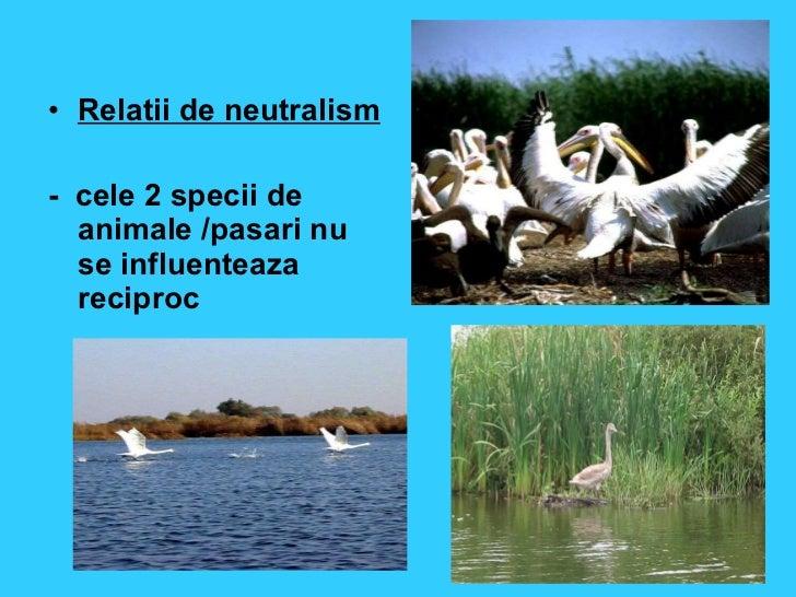 Relatii intere speciile animale
