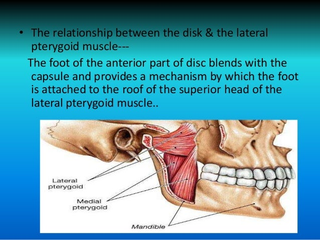 Relationship Of Tmj Anatomy And Pathology And Related
