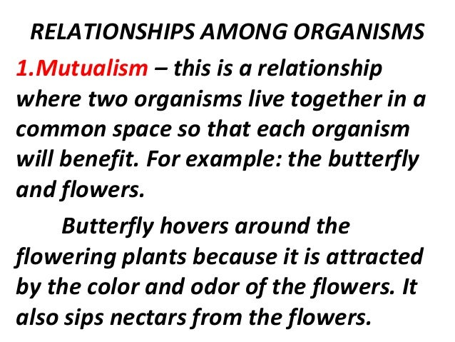 Relationships among organisms